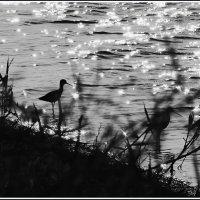 Утро на озере :: Николай Волков