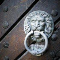 Один из львовских львов :: Avada Kedavra!