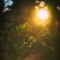 Закат в тайге :: Артур Миханев