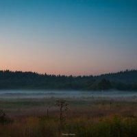туман :: Timofey Chichikov