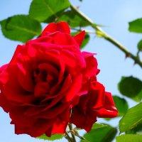 Майская красавица... :: Тамара (st.tamara)