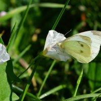 Лето - пора цветов и бабочек!!! :: *MIRA* **