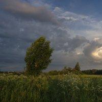 Перед грозой :: Валентин Котляров