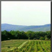 старый  виноградник. :: Ivana