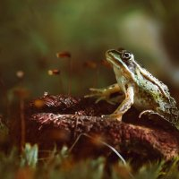 Царевна лягушка. :: Olga Kramoreva