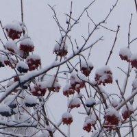 Зима :: Gal` ka