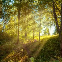 Лето в лесу :: Татьяна Огаркова