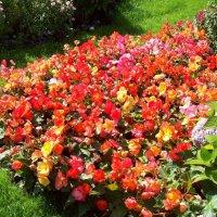 Цветники Царского Села :: alemigun
