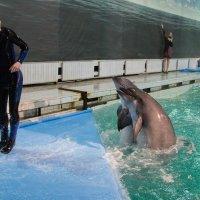 Утришский дельфинарий :: Эльвина Доронина