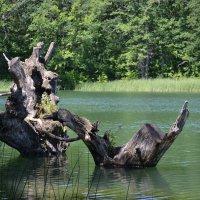 По середине озера. :: Тамара Мадюдина