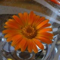 Оранжевое солнышко :: Людмила