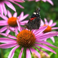 Бабочка на цветке :: Alex Bezvetrenniy