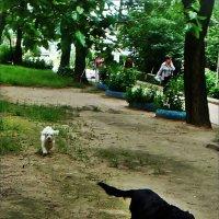 Не так быстро! :: Нина Корешкова
