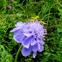 цветок осени :: Анна