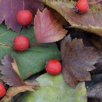 Осень :: Gal` ka