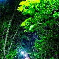 Коломенское ночью :: Игорь Герман