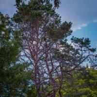 дерево :: Timofey Chichikov
