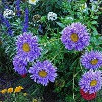 Цветы августа :: Nina Yudicheva