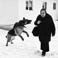 Нам не страшен серый волк :: лариса