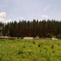 Вот это лес! А у леса, уже давно выброшен старый мост в селе Шестаково ул. Чибисовка Воронежская обл :: Ольга Кривых