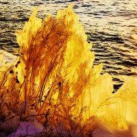 Золотой лёд :: Анатолий Иргл