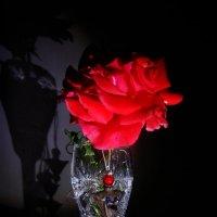роза с чалей :: Александр