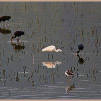 Там,где птицам хорошо :: Николай Волков