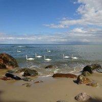Величественно плывут лебеди по морю :: Маргарита Батырева