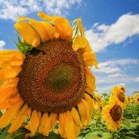 Лето, солнце.... :: Svetlana Sneg