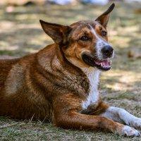 Собака-спасатель :: cfysx