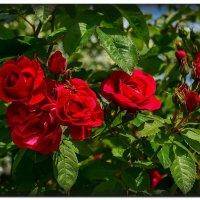 Цветочное фламенко :: Ирина Falcone