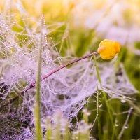 Цветок в паутине. :: Александр Дидовец