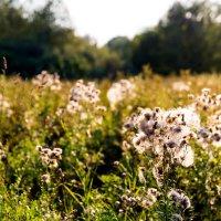 Summer flowers :: Sergey Sergaj