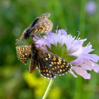 Цветок и бабочки :: Елена Шемякина