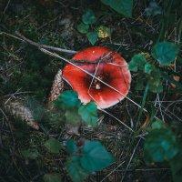 Лесной натюрморт :: Ольга Перевалова