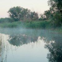 Утро туманное :: Андрей Щукин