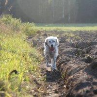 В поле. :: Инна Малявина