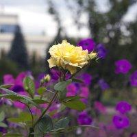 Цветок :: Сергей Кондратович