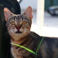 Еще один  кот.. или кошка... :: Лариса Журавлева