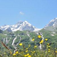 альпийский луг на поляне Таймази :: Мария Климова