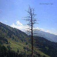 Мы рождаемся, страдаем, умираем, а горы стоят неколебимо. :: Anna Gornostayeva