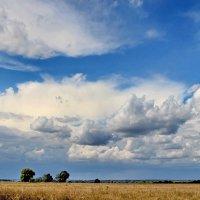 Беспомощно стареющее лето... :: Лесо-Вед (Баранов)