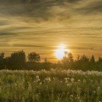 Тишина летнего заката :: Алексей Соминский