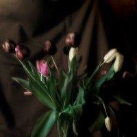 тюльпаны :: Гриша  6х9 или 9х12