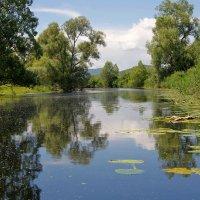 Национальный парк Хутово Блато :: Михаил Рогожин