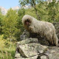 в горах Осетии :: Илья Скупой