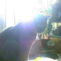 Да знаю, я, знаю, что на стол хорошие, умные кисы не лезут! :: Galina194701