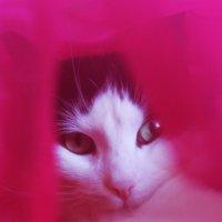 Кот за розовой шторой :: Avada Kedavra!