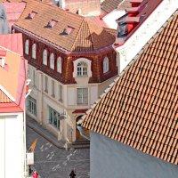 Вид на таллинские крыши со смотровой площадки :: Олег Попков