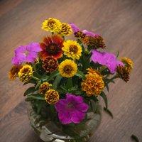 цветы из моего сада :: Наталья М